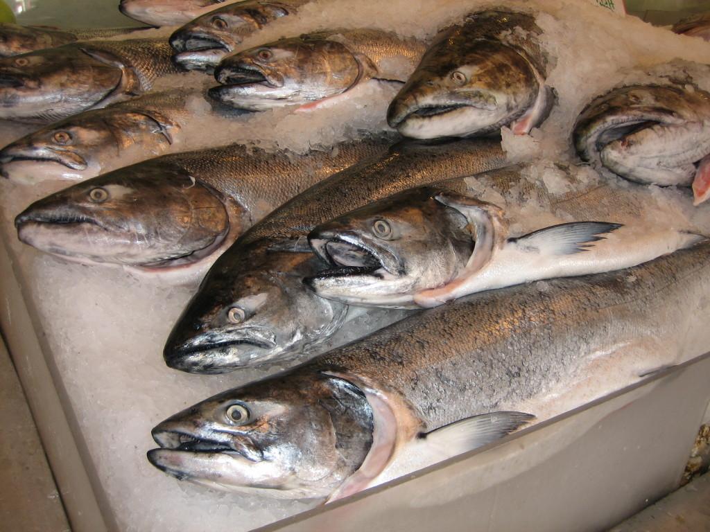atlantic cod..