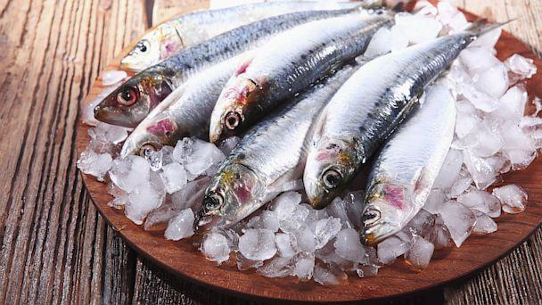 atlantic sardine