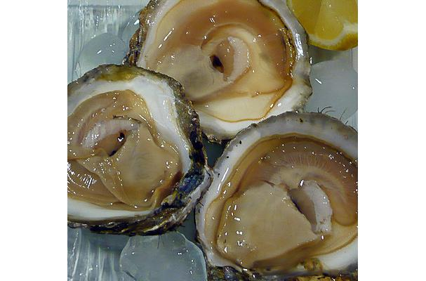 european oysters
