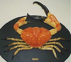 tasmanian king crabs