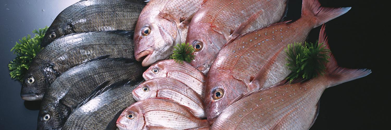 seven oceans fish processing ltd banner